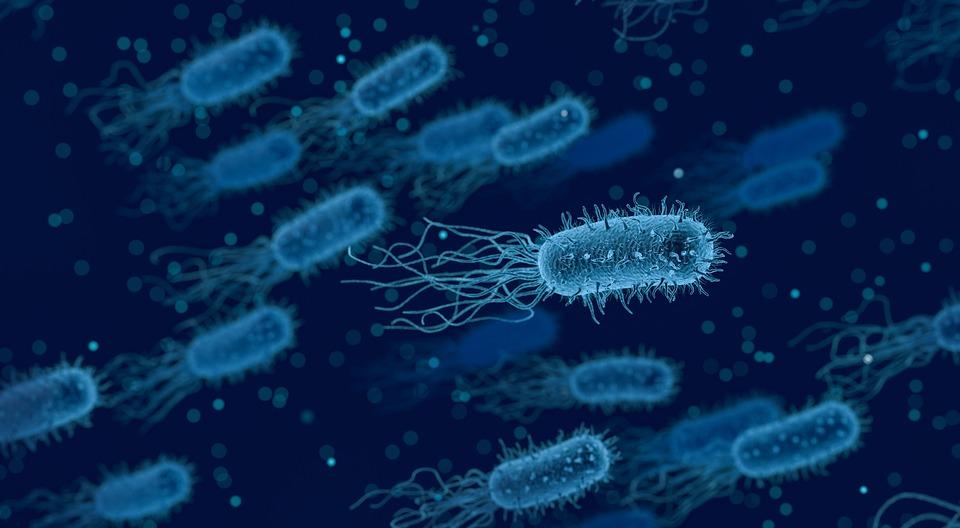 Le microbiote intestinal : une relation symbiotique avec l'Homme